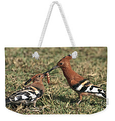 Weekender Tote Bag featuring the photograph African Hoopoe Feeding Young by Liz Leyden