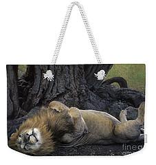 African Lion Panthera Leo Wild Kenya Weekender Tote Bag