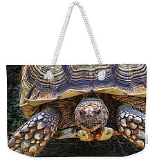 Weekender Tote Bag featuring the photograph African Spurred Tortoise by Peggy Collins