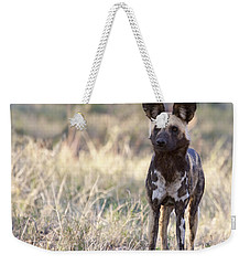 African Wild Dog  Lycaon Pictus Weekender Tote Bag by Liz Leyden