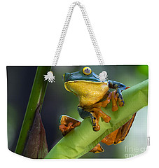 Agalychnis Calcarifer 4 Weekender Tote Bag by Arterra Picture Library