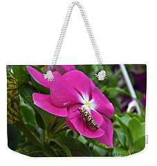 Weekender Tote Bag featuring the photograph Ailanthus Webworm Moth Visiting My Garden by Verana Stark