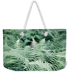 Weekender Tote Bag featuring the photograph Algonquin Ferns by David Porteus