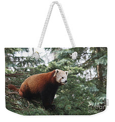 All Alone Weekender Tote Bag by Judy Whitton