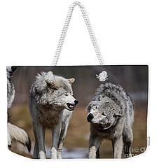 Weekender Tote Bag featuring the photograph Alpha Displeasure by Wolves Only