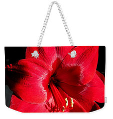 Weekender Tote Bag featuring the photograph Amaryllis Named Black Pearl by J McCombie