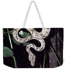 Amazon Tree Boa Weekender Tote Bag by James Brunker