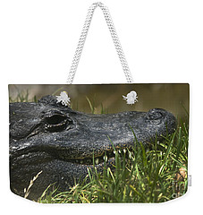 Weekender Tote Bag featuring the photograph American Alligator Closeup by David Millenheft