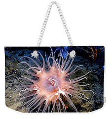 Weekender Tote Bag featuring the photograph Anemone Sea Life Sea Ocean Water Underwater by Paul Fearn