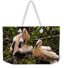 Anhinga Chicks Weekender Tote Bag by Ron Sanford