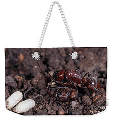 Ant Queen Fight Weekender Tote Bag by Gregory G. Dimijian, M.D.