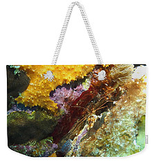 Arrow Crab In A Rainbow Of Coral Weekender Tote Bag by Amy McDaniel