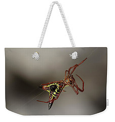 Arrow-shaped Micrathena Spider Starting A Web Weekender Tote Bag by Daniel Reed