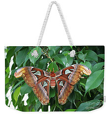 Weekender Tote Bag featuring the photograph Atlas Moth #2 by Judy Whitton