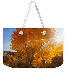 Autumn Golden Birch Tree In The Sun Fine Art Photograph Print Weekender Tote Bag by Jerry Cowart