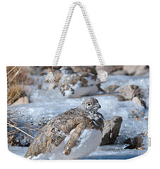 Weekender Tote Bag featuring the photograph Autumn Plumage White-tailed Ptarmigan by Cascade Colors