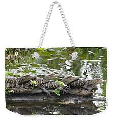 Baby Alligators Weekender Tote Bag by Dan Sproul