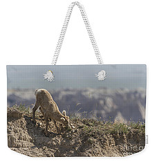 Baby Bighorn In The Badlands Weekender Tote Bag