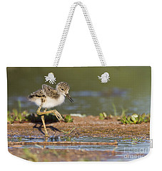 Baby Black-necked Stilt Exploring Weekender Tote Bag