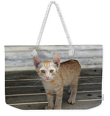 Baby Kitty Weekender Tote Bag by Catie Canetti