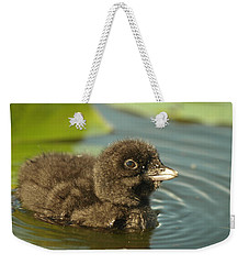 Weekender Tote Bag featuring the photograph Baby Loon by James Peterson
