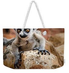 Baby Ringtail Lemur Weekender Tote Bag