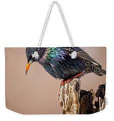 Backyard Birds European Starling Weekender Tote Bag by Bill Wakeley