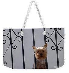 Balcony Dog Weekender Tote Bag by Phil Banks