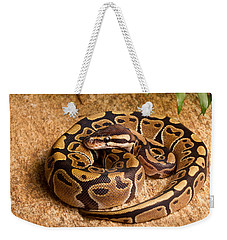 Ball Python Python Regius Coiled On Rock Weekender Tote Bag by David Kenny