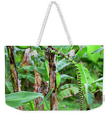 Bananas Hanging On Tree, Spring Weekender Tote Bag
