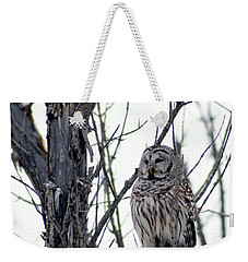 Barred Owl 2 Weekender Tote Bag by Steven Clipperton