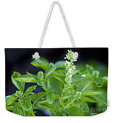 Weekender Tote Bag featuring the photograph Basil With White Flowers Ready For Culinary Use by David Millenheft