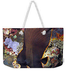 Weekender Tote Bag featuring the photograph Bat Fish by Sergey Lukashin