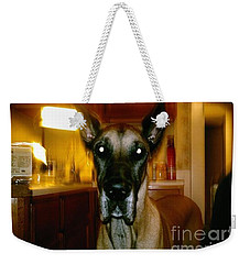 Weekender Tote Bag featuring the photograph Batdog Duke by Kelly Awad