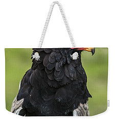 Bateleur 3 Weekender Tote Bag by Arterra Picture Library