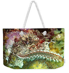 Bearded Fireworm On Rainbow Coral Weekender Tote Bag by Amy McDaniel