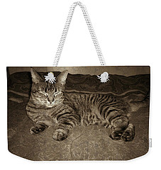 Weekender Tote Bag featuring the photograph Beautiful Tabby Cat by Absinthe Art By Michelle LeAnn Scott