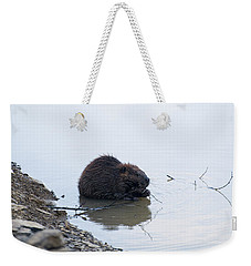 Beaver In The Shallows Weekender Tote Bag