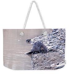 Beaver On Dry Land Weekender Tote Bag