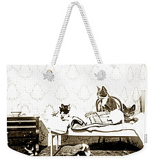 Weekender Tote Bag featuring the photograph Bed Time For Kitty Cats Histrica Photo Circa 1900 by California Views Mr Pat Hathaway Archives