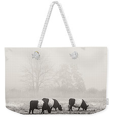 Belted Galloway Cows On Foggy Farm Field In Maine Weekender Tote Bag