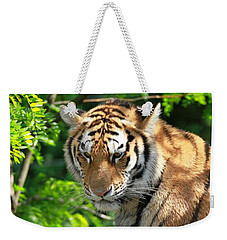 Bengal Tiger Portrait Weekender Tote Bag by Dan Sproul