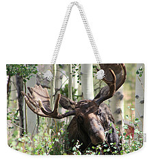 Big Daddy The Moose 3 Weekender Tote Bag by Fiona Kennard