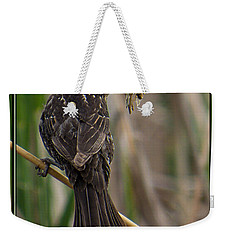 Weekender Tote Bag featuring the photograph Big Dinner For Female Red Winged Blackbird II by Patti Deters