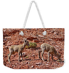 Weekender Tote Bag featuring the photograph Bighorn Canyon Sheep Wyoming by Janice Rae Pariza