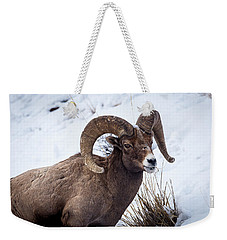 Weekender Tote Bag featuring the photograph Bighorn Ram by Michael Chatt