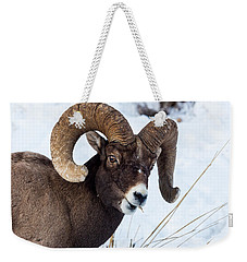 Weekender Tote Bag featuring the photograph Bighorn Sheep by Michael Chatt