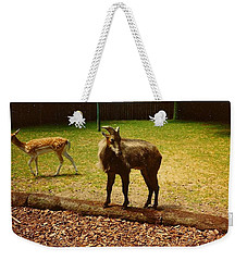 Weekender Tote Bag featuring the photograph Billy Goat Keeping Lookout by Amazing Photographs AKA Christian Wilson