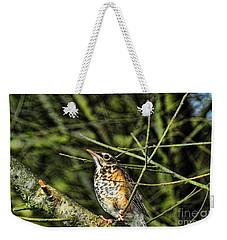 Bird - Baby Robin Weekender Tote Bag by Paul Ward