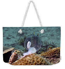 Weekender Tote Bag featuring the photograph Birth Of Marine Cuttlefish by Sergey Lukashin